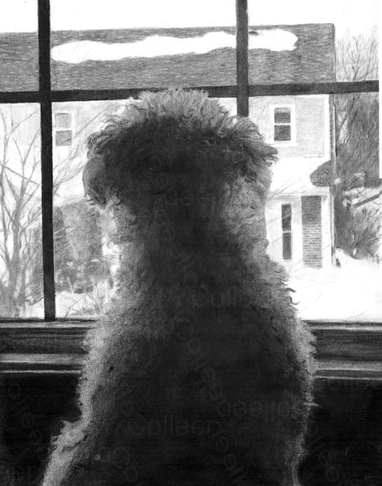 White Dog Waiting
